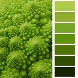 Выбор диаграммы цвета Стоковые Изображения RF
