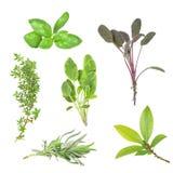 выбор листьев травы Стоковые Фотографии RF