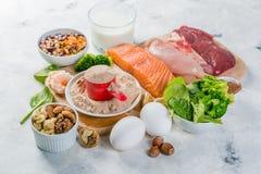 Выбор на источниках вегетарианца и протеина животного происхождения Стоковое Изображение
