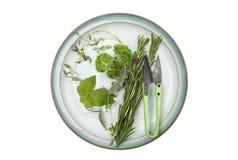 выбор плиты трав стоковое изображение
