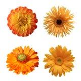 Выбор различных изолированных цветков Стоковые Изображения