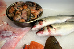Выбор рыб Стоковые Фотографии RF