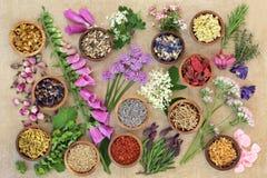 Выбор травы и цветка целебный Стоковые Изображения