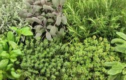 выбор травы стоковая фотография
