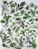 выбор трав Стоковое Изображение