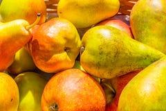 Выбор яблок штурмана и краснеет и груш конференции Стоковое Фото