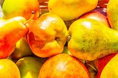Выбор яблок штурмана и краснеет и груш конференции Стоковое Изображение RF