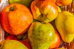 Выбор яблок штурмана и краснеет и груш конференции Стоковые Изображения