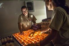 Выбор яичек стоковые изображения