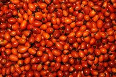 выбранная вальма ягод свеже подняла Стоковое фото RF