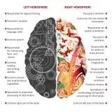 Выведенный мозг и иллюстрация вектора infographics правых полушарий Стоковое фото RF