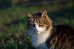Выглядеть кота серьезное красивейший кот стоковая фотография