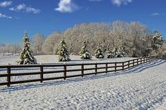 Выгон в снеге зимы Стоковое Фото