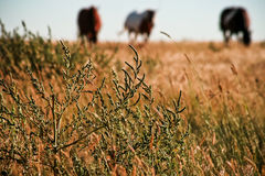 выгон лошадей травы Стоковое Изображение