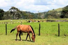 Выгон лошади на поле на заднем плане табун коров стоковые фотографии rf