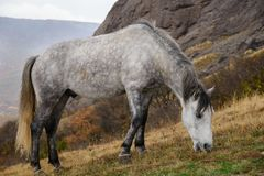 выгон лошади Стоковые Фото