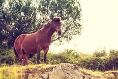 выгон лошади Стоковая Фотография RF