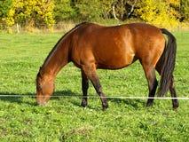 выгон лошади стоковое фото