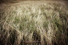 Выгон с сухой травой Стоковое Изображение RF