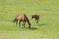 выгон Тоскана Италии лошадей Стоковое Фото