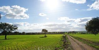 Выгон дубов и зеленый луг с голубым небом брызнули с облаками и путем Стоковое Изображение