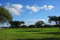 Выгон дубов и зеленый луг с голубым небом брызнули с облаками 5 Стоковые Фотографии RF