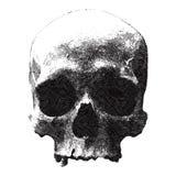 Выгравированный дизайн для печати футболки с черепом бесплатная иллюстрация
