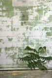 выдержанная стена завода Стоковые Фото