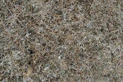 Выдержанная сухая трава, Hay предпосылка сухой травы стоковая фотография rf