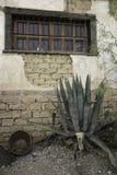Выдержанное здание самана с кактусом Стоковое фото RF