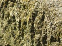 Выдержанный камень с предпосылкой лишайника и мха Стоковые Фотографии RF