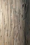 выдержанный телефон полюса Стоковые Фотографии RF