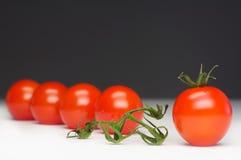 выдержанный томат Стоковое Изображение RF
