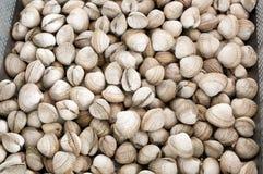 вызванные clams куколи общий рыбный базар Стоковые Фотографии RF