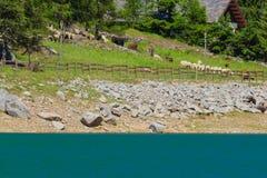 Вызывающий мысли ландшафт горы в национальном парке большого p, в Пьемонте, Италия Стоковые Фотографии RF