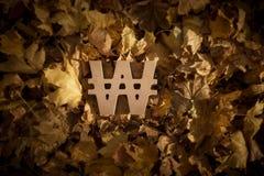 Выигранный символ валюты на листьях осени в последнем вечере Солнце стоковое фото