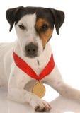выигрывать собаки пожалования Стоковые Изображения