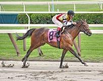 Выигрывая лошадь в грязи стоковое изображение