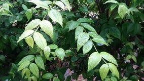 Выйдите дерево на дождевой лес видеоматериал