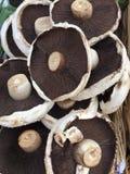 Выйдите корзины вышед на рынок на рынок стойла вполне свежих грибов Portobello Стоковые Фото