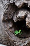 Выйдите вырастите вверх в древесине стоковое изображение rf
