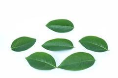 выйдите зеленый цвет Стоковая Фотография RF