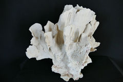 Выйдите коралл Стоковые Изображения RF