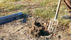 Выкапывая весна зарывает почву в саде с вилой Стоковые Фотографии RF