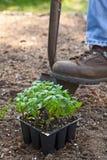 выкапывая сад Стоковые Изображения