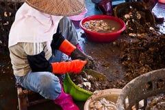 Выкапывая устрица Стоковые Фото