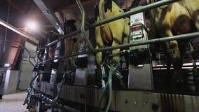 Выключение доя машины Процесс автоматически поворачивать доя машину акции видеоматериалы