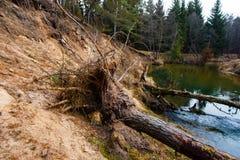 Выкорчеванные деревья лежа в воде цветастая земля размывания стоковая фотография
