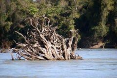 Выкорчеванные стволы дерева в затопленном лесе в засушливом сезоне стоковые изображения