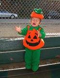 Выкрик младенца тыквы Стоковое Фото